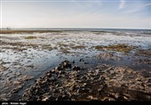 حدود 43 میلیارد تومان برای نجات خلیج گرگان نیاز است