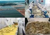 تولید میگو در استان گلستان 65 درصد افزایش یافت