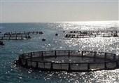 سواحل مکران میان بـُر ایران برای رسیدن به توسعه