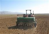 کمبود و بازار سیاه گندم بذری در گلستان/رئیس جهادکشاورزی استان: خیلی زود مشکلات را برطرف میکنیم