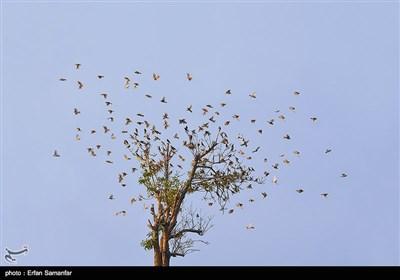 دنیای زیبای پرندگان