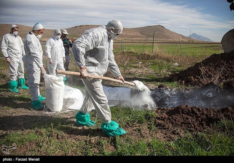 اصفهان| هیچ گله صنعتی مرغ تخمگذار درگیر آنفلوآنزای پرندگان نیست؛ بیماری تحت کنترل است