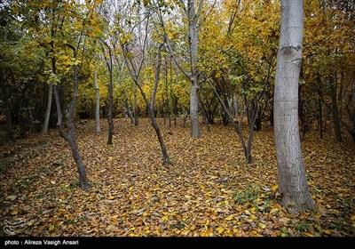 پاییز حاشیه زاینده رود