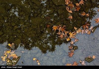 زاینده رود میں موسم خزاں کی تصویری جھلکیاں