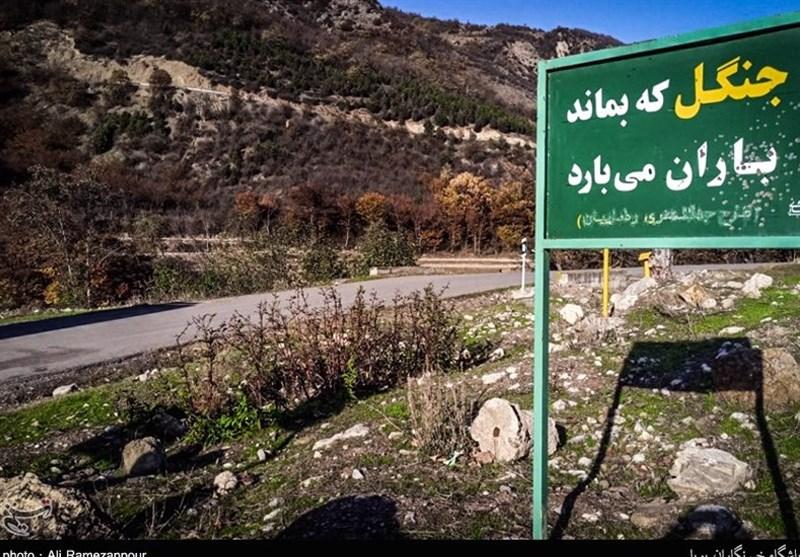 اکسیژن جهان در خاک ایران/موزه زنده دنیا با درختان درمانگر و حیوانات منحصربهفرد + تصاویر