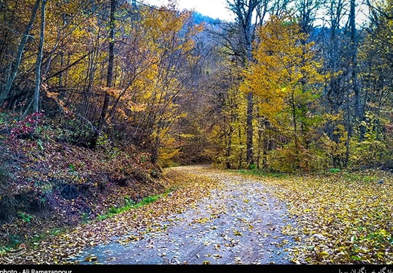 Caspian Hyrcanian Mixed Forests in Northern Iran