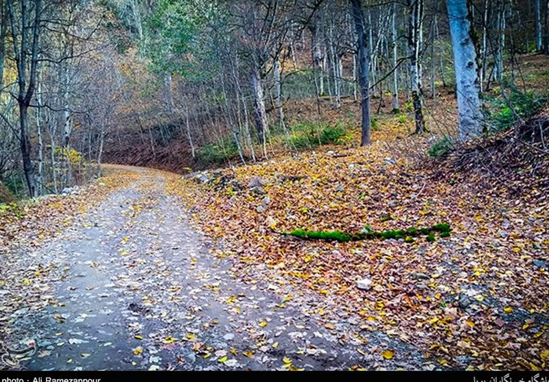 Caspian Hyrcanian Mixed Forests in Northern Iran - Tourism news