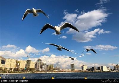پرندگان مهاجر دریاچه شهدای خلیج فارس
