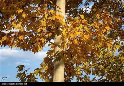 طبیعت پاییزی - ارومیه