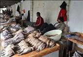 از شایعه تا واقعیت| گزارش تسنیم از پشتپرده شکار و فروش پرندگان مهاجر در فریدونکنار