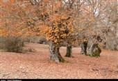 جنگل لولمان اشکورات گیلان؛ مقصد گردشگری پاییز به روایت تصویر