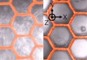 Scientists Create Microscopic Sunflower-Like 3D Polymer Shapes for Improved Solar Panels