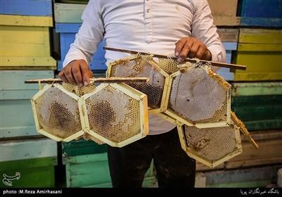 کندو مجموعهای از حفرههای شش ضلعی از جنس موم است که به وسیله زنبور عسل ساخته میشود و محل نگاه داری لاروها و ذخیرهسازی عسل و گرده است.