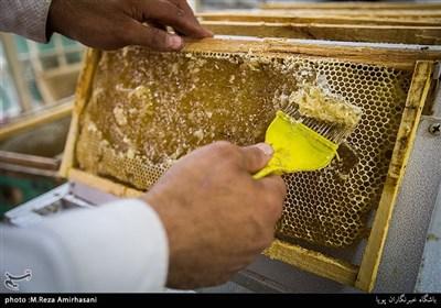 """""""عسل"""" در طب سنتی و تغذیه ایرانی ــ اسلامی از جایگاه بسیار بالایی برخوردار است"""