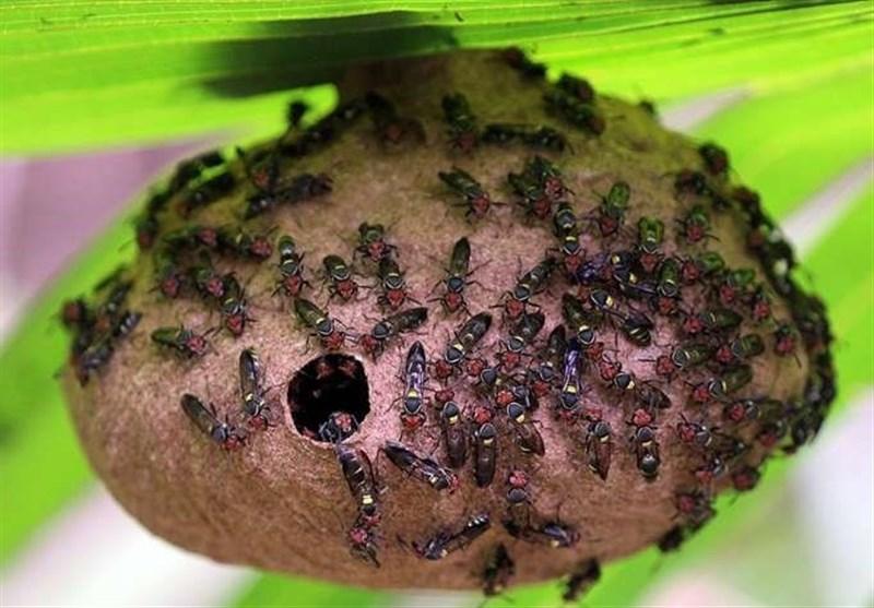 Venom of Wasp, Bee Repurposed as Antibiotic Drug