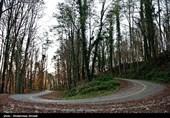 اردبیل  22 اثر طبیعی در جنگل فندقلوی نمین شناسایی شد
