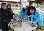 ضیافتهای رایگان ماهی کیلکا در ترکیه + عکس