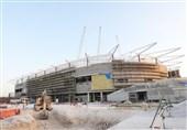 گزارش خبرنگار اعزامی تسنیم از قطر| شیر در صحرا، ترسناک یا خاطرهساز! + تصاویر