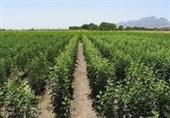 طرح توسعه و جایگزینی باغات بهجای محصولات زراعی پر مصرف در سمنان اجرایی میشود