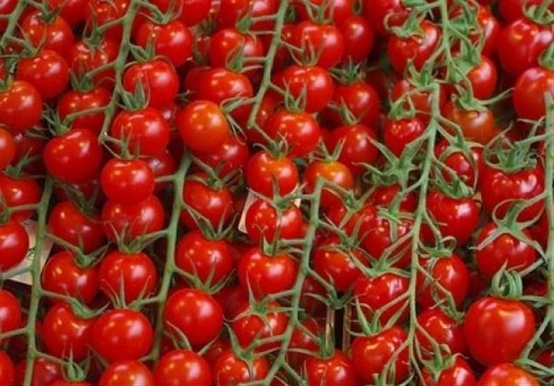 107 هزار تن گوجه فرنگی از استان بوشهر صادر شد