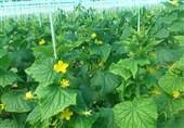 شهرستانهای شرق استان تهران ظرفیت جایگزینی محصولات گلخانهای وارداتی را دارد