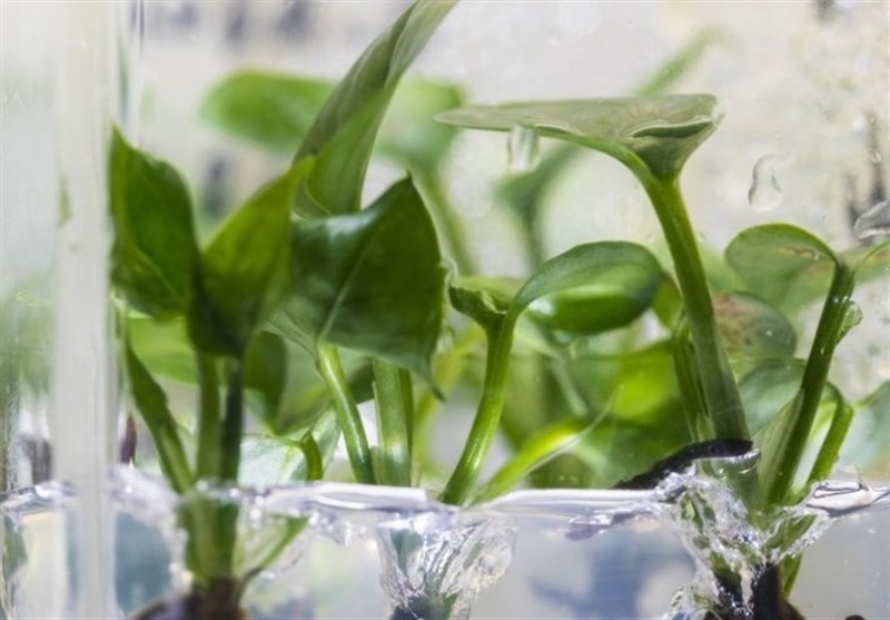 Common Houseplant with Genetic Modification Can Remove Polluted Air