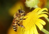 Scientists Discover Bees Can Count Using Only Four Brain Cells