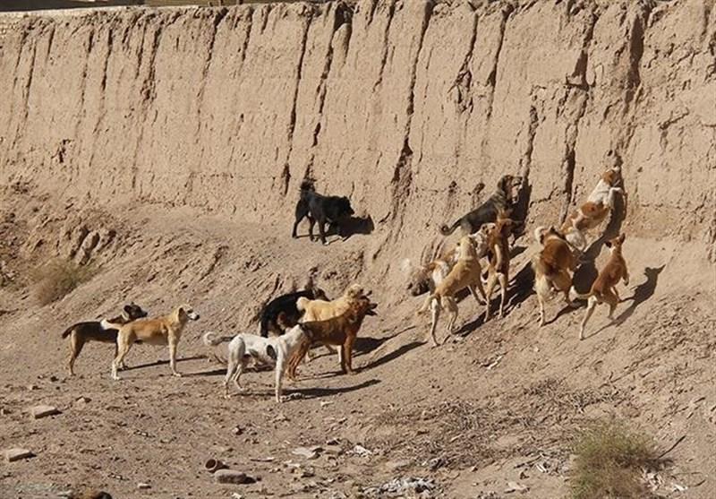 خوزستان| سگهای ولگرد در هندیجان ساماندهی شوند