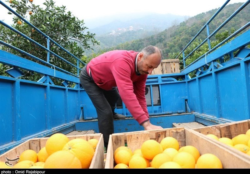 سود 200درصدی میوه در جیب دلالان و واسطهها/ 70 درصد میوههای پاییزه در انبارهاست