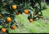 سهم 10 درصدی استان فارس در تامین غذای ایرانیان؛ کشورهای آسیای میانه مقصد مرکبات استان
