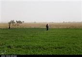 اجرای طرح گردشگری مزرعه در مازندران موفق نبود
