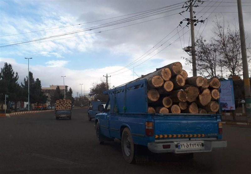 چه کسی مقصر قلع و قمع درختان منطقه قرهداغ است؟