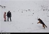 ایران کے شہر قزوین میں شدید برفباری