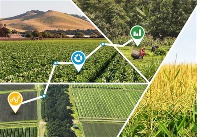 500 تشکل و تعاونی در بخش کشاورزی همدان فعال است