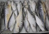 سود سرشار دلالان در نبود بازارچههای فروش ماهی در کهگیلویه و بویراحمد