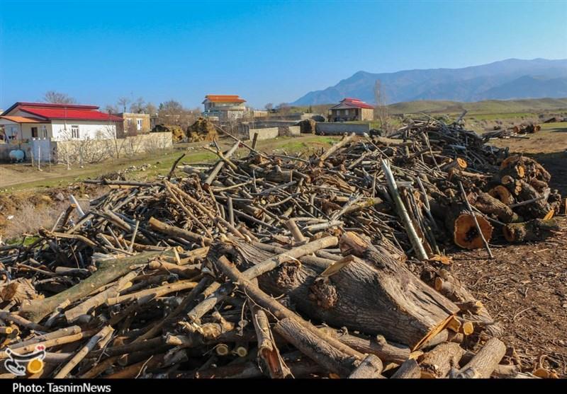 قاچاق چوب در منطقه ارسباران؛ از واقعیت تا انکار