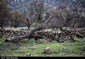 کرمانشاه  حفاظت از 42هزار هکتار منطقه حفاظت شده توسط 4 محیطبان