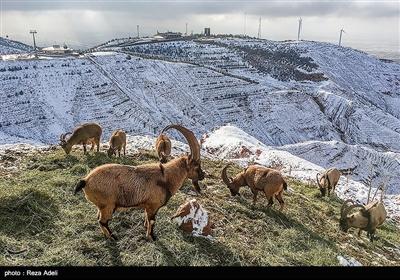 تفرجگاه کوهستانی عینالی تبریز