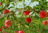 فوائد التفاح لجسم الانسان..