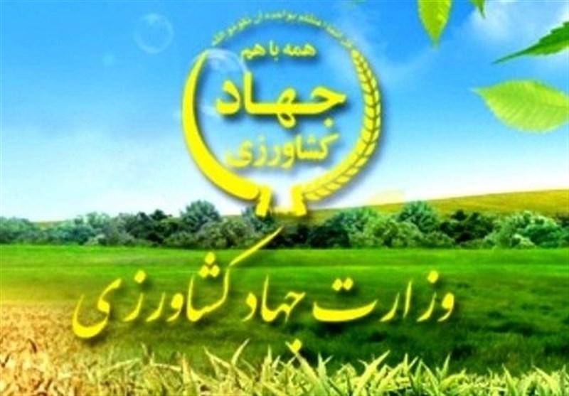 واکنش وزارت جهاد کشاورزی به یک خبر