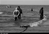 آغاز صید ماهیان استخوانی در دریای خزر+ تصویر