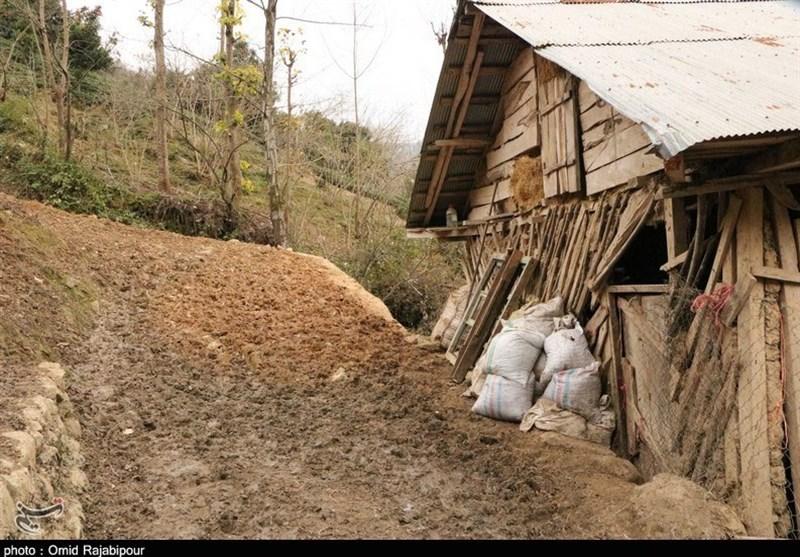 زندگی در روستای «صفرآباد» گیلان به روایت تصویر