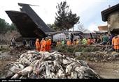 محموله گوشت هواپیمای بوئینگ 707 امحا شد