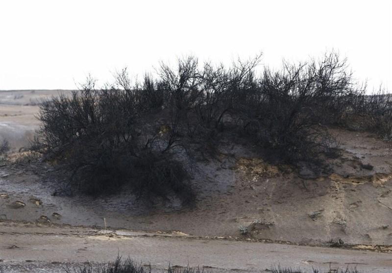 """سایه مرگبار """"مالچپاشی"""" بر طبیعت خوزستان + فیلم و تصاویر"""