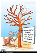کاریکاتور/ اندراحوالات قیمتمرغ و آقای آسیبپذیر