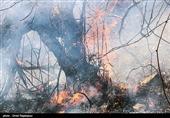 آتش سوزی در جنگلهای سیاهکل گیلان