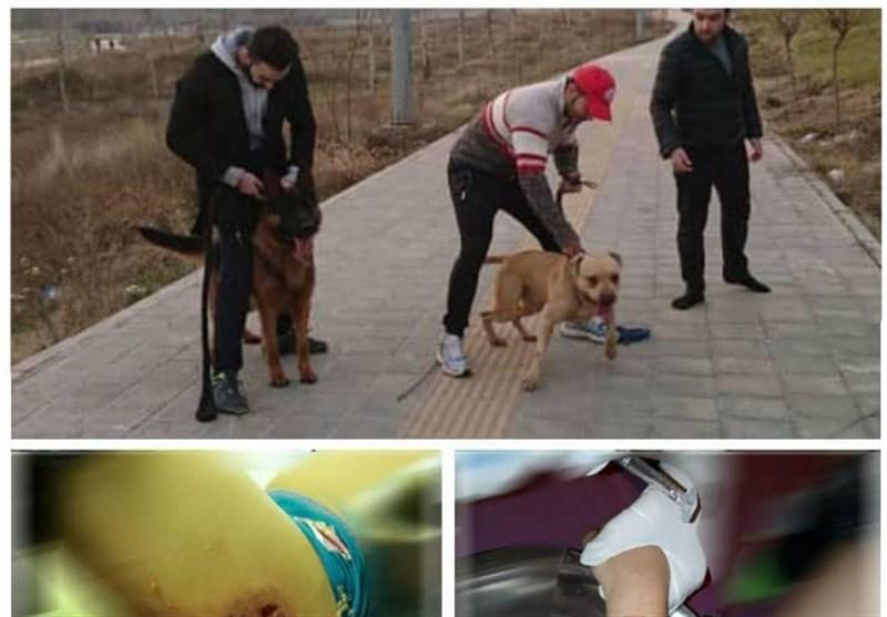 جزئیات حادثه حمله دو سگ به دختر 10 ساله در لواسان + عکس