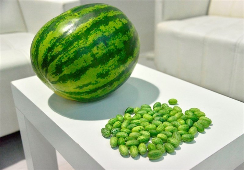تولید هندوانه به اندازه زیتون در ترکیه + عکس