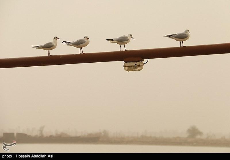 گرد و خاک بار دیگر استان اصفهان را فرا میگیرد؛ تداوم کاهش کیفیت دید تا ظهر فردا