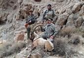 افزایش تلفات جادهای وحوش با شکارفروشی سازمان محیط زیست